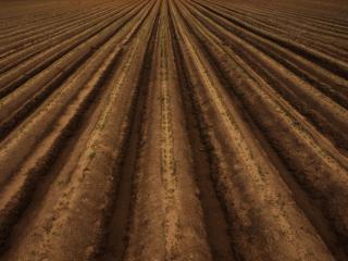 Rows in field