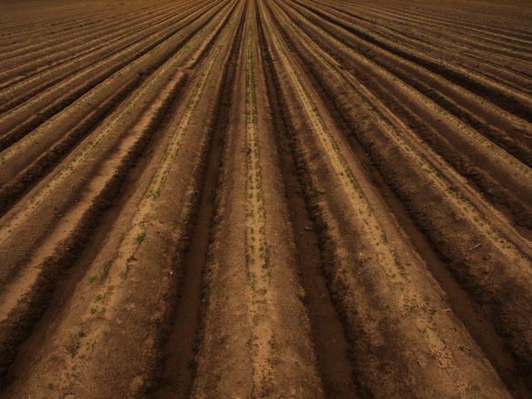 Rows in field